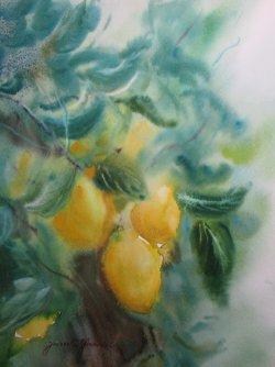 Les Citrons        VENDU